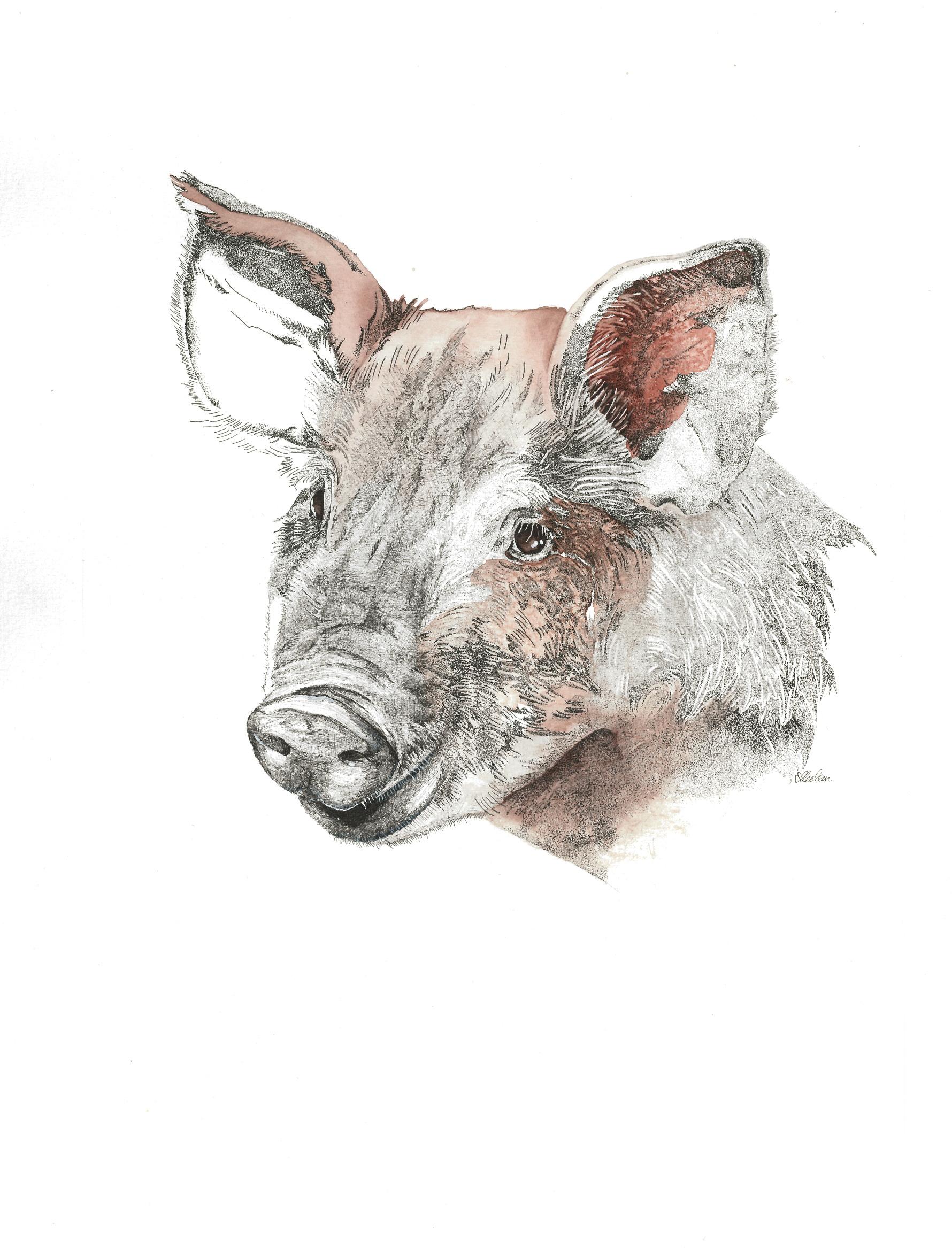 Portrait de la ferme 2