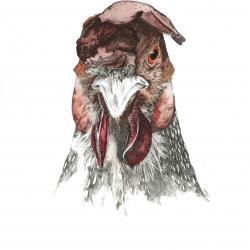 Portrait de la ferme 1