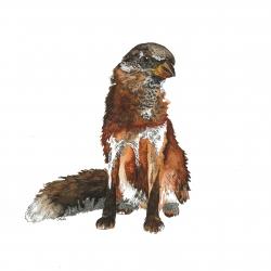 Oiseau renard