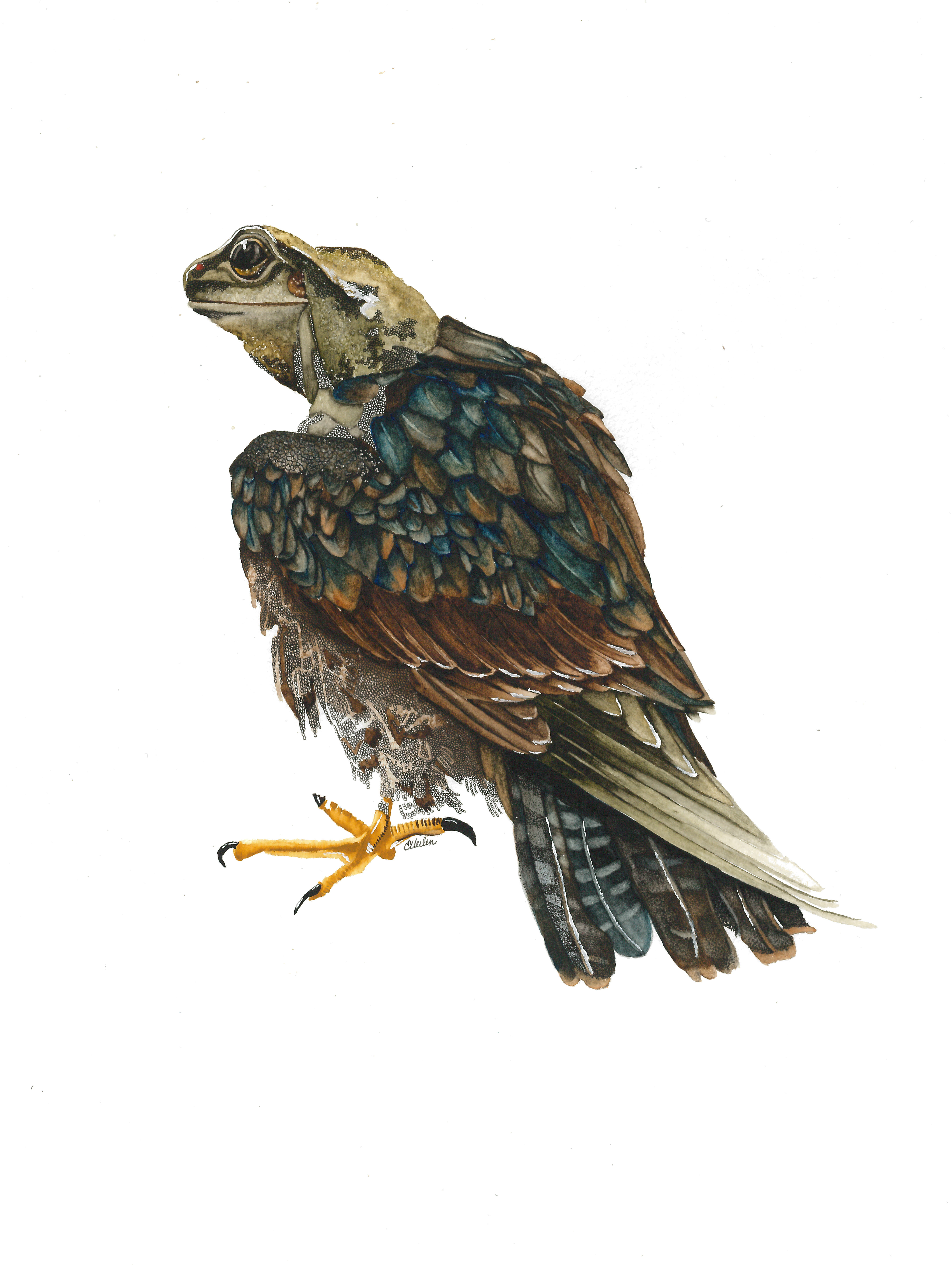 Grenouille aigle