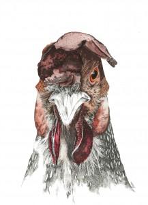 Carnet coq