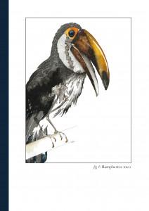 Carnet Toucan